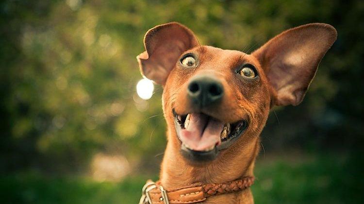 come-rendere-felice-un-cane-happy-dog