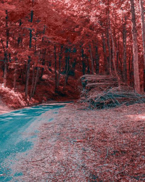 11camigliatello-sila-480x600 Il colore del mondo in tritanopia