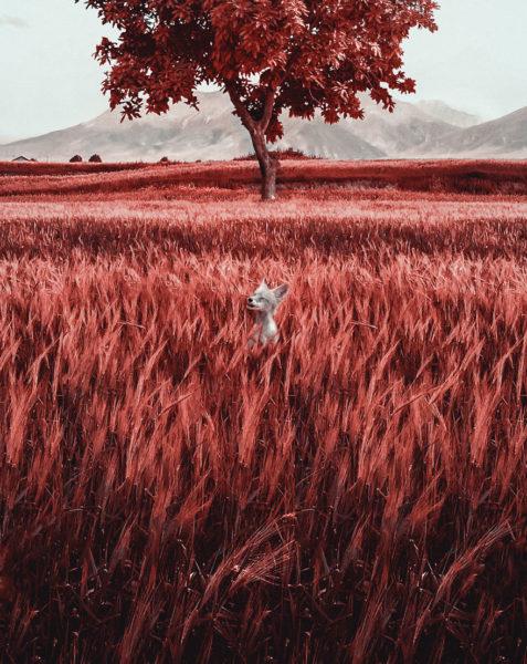1volpe-477x600 Il colore del mondo in tritanopia