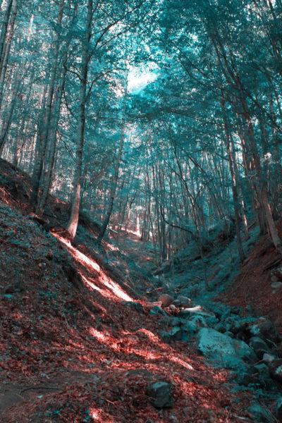 8sentiero-boscoso-400x600 Il colore del mondo in tritanopia