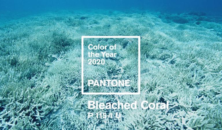 Il colore pantone del 2020 'sarà Bleached Coral'
