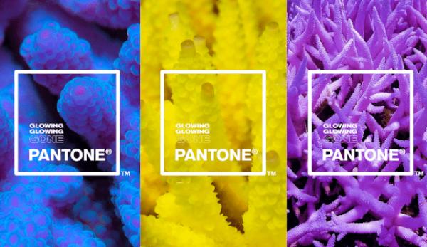 Pantone-Adobe-palette-robadagrafici-600x347 Pantone e Adobe uniscono le forze con la palette ispirata ai coralli