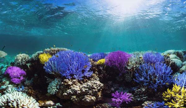 Pantone-Adobe-palette-robadagrafici1-600x349 Pantone e Adobe uniscono le forze con la palette ispirata ai coralli