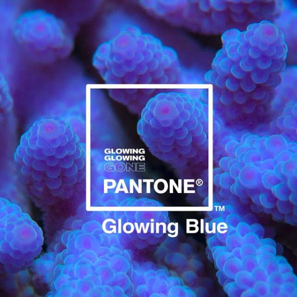 Pantone-Adobe-palette-robadagrafici2-600x600 Pantone e Adobe uniscono le forze con la palette ispirata ai coralli