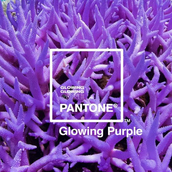 Pantone-Adobe-palette-robadagrafici4-600x600 Pantone e Adobe uniscono le forze con la palette ispirata ai coralli
