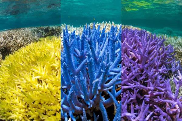 Pantone-Adobe-palette-robadagrafici5-600x399 Pantone e Adobe uniscono le forze con la palette ispirata ai coralli