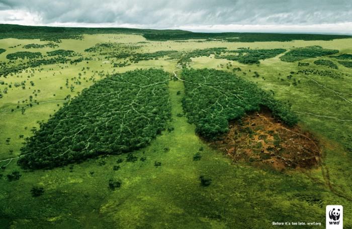 WWF:  nove dei loro più  incredibili cartelloni pubblicitari